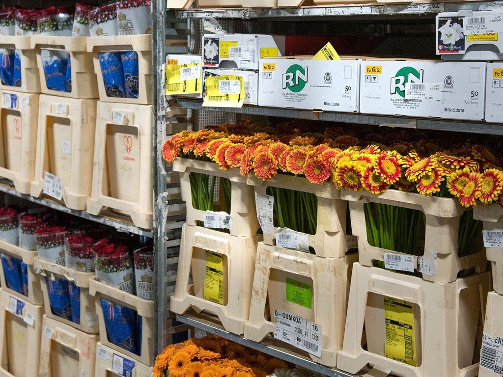 Hilverda De Boer quality flowers export worldwide