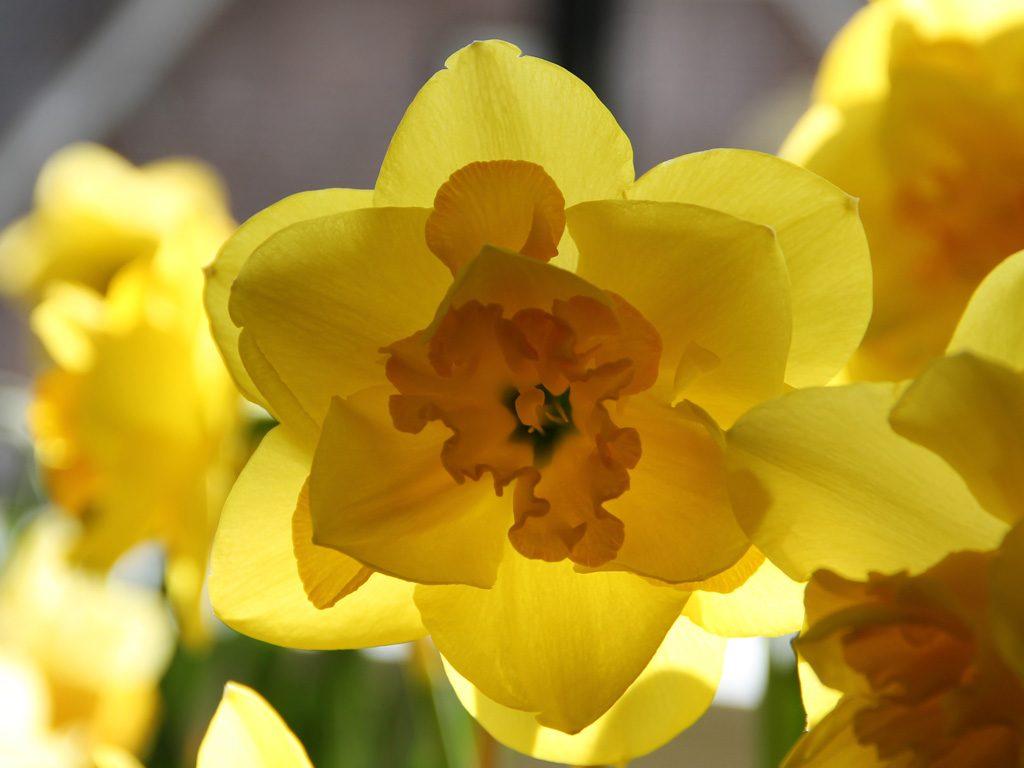 Hilverda De Boer quality flowers export worldwideHilverda De Boer quality flowers export worldwide