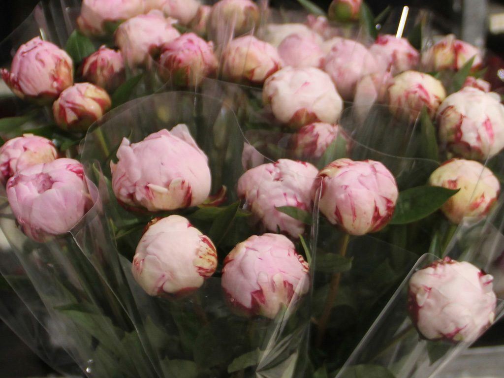 Hilverda De Boer Bouquets assortment